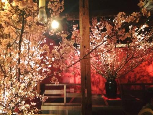 さくら〜さくら〜♬花の命は結構長い〜♪の画像